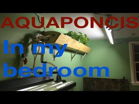 My DIY Indoors Aquaponics System