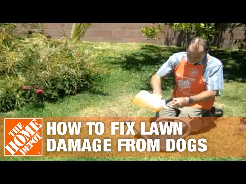 How To Fix Lawn Damage from Dogs - The Home Depot