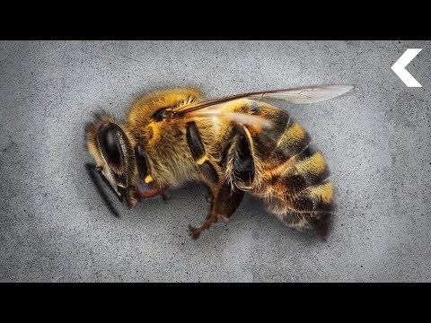 After a Decade of Colony Collapse, Bees Are Bouncing Back! (Sort Of)