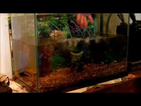 How to Clean the Gravel in a Tropical Fish Tank