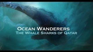 Ocean Wanderers - Whale Shark Documentary
