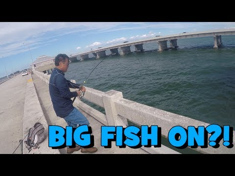 He Had a NICE FISH ON! Using Sabiki for Bait; & Bait for Grouper! (FL Slam EP7) (St Petersburg, FL)