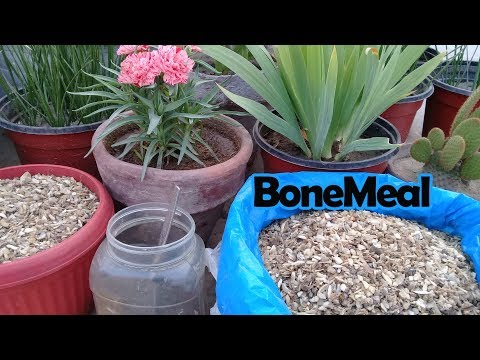 What is Bone Meal | How to Use Bone Meal for Plants | Organic Fertilizer | Bone manure