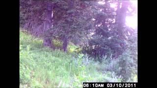 Sixbit Springs 12 days of game cam videos 7 24 14