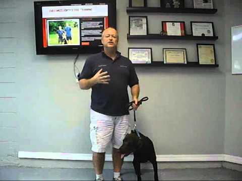 Service Dog Training - Kota - Emotional Support - Phase One Day One