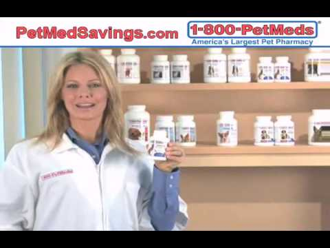 Find Prescription Strength Cat Antibiotics Online!