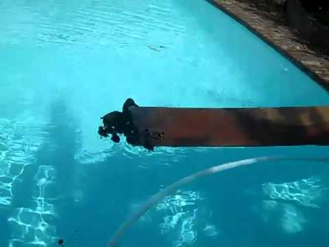 Trying to get ducks out of pool - Ramp  2