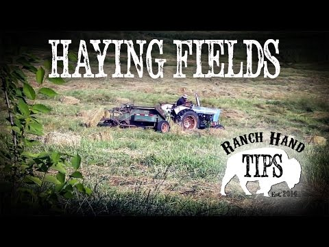 Cultivating Hay and Haying your Fields: Ranch Hand Tips