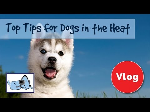 Top Tips to Keep Your Dog Cool in the Summer Heat! 🐶 #HEALTHVLOG03