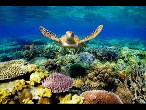 Sea Turtles Documentary HD - Home for the Hawksbill