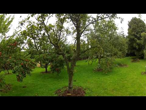 Orchard update
