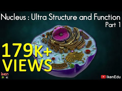 Nucleus: Ultra structure and Function- Part 1 - Iken Edu - CBSE - ICSE
