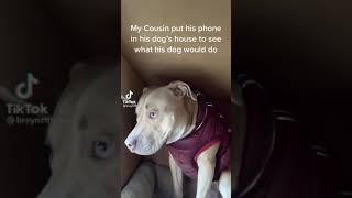 He Put His Phone In His Dog's House To See What His Dog Would Do #Shorts