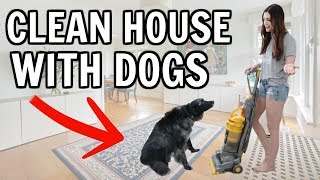 CLEAN WITH ME | How to Have a Clean House With Dogs