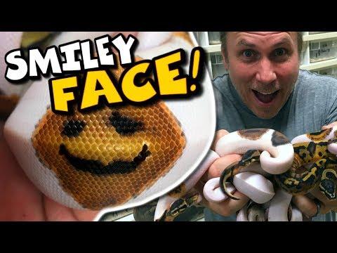 I FINALLY GOT A SMILEY FACE SNAKE!!!!   BRIAN BARCZYK