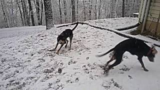 My dogs love the snow 1