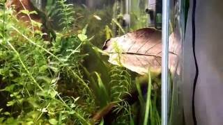 28 Gallon Hex Nano Fish Tank (08-04-2016)