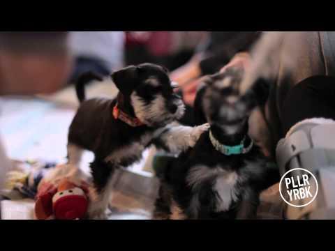 Trinity Western University Puppy Room - No More Stress!