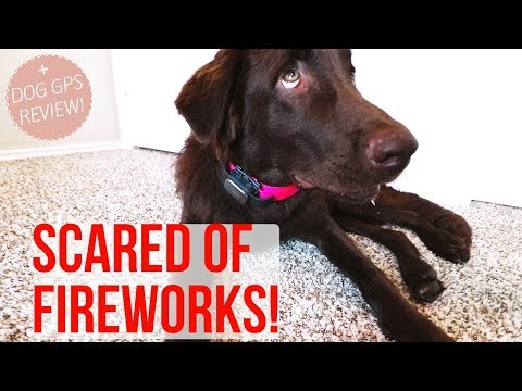 HOW TO: Calm Dog During Fireworks + Pet GPS Review!