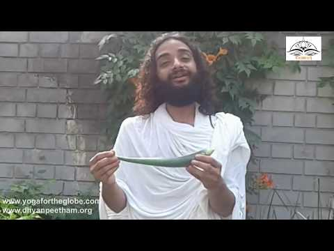 Fresh Aloevera Remove Poison Before Use of Fresh Aloe Vera by Nityanandam Shree