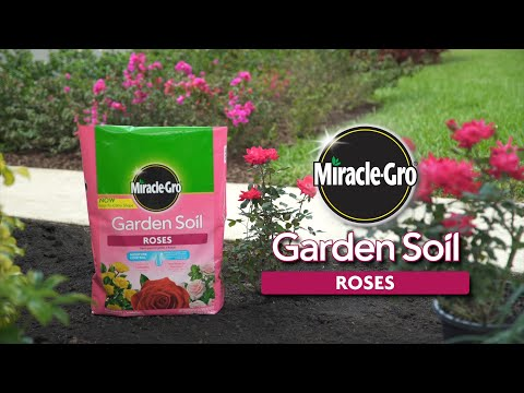 How to Use Miracle-Gro® Garden Soil for Roses