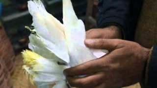 #x202b;جمعية مجاهد البربري لحمام الزينة - حمام شقلباظ#x202c;lrm;