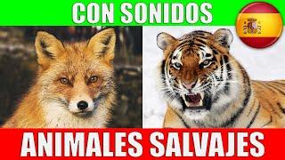 ANIMALES SALVAJES para Niños Pequeños en Español - Sonidos y Nombres | Video Educativo