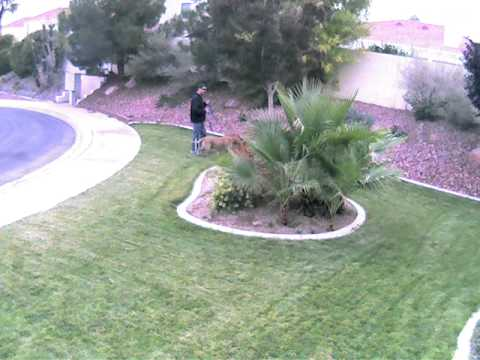 dog craps on my lawn