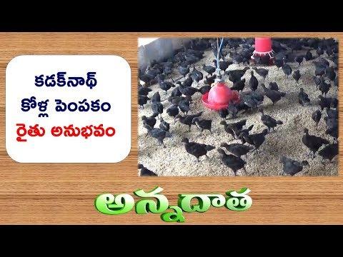 Black Hen ' KADAKNATH ' Rearing Practices by Warangal Farmer || ETV Annadata