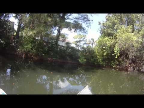 Big Bluegill on fly rod