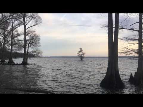 Reelfoot Lake April 2 2017