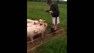 getting shocked by electric fence