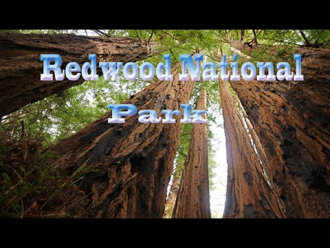 California Travel Destination & Attractions | Visit   Redwood National and State Parks Show