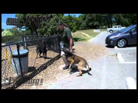 Using Dog Parks to Proof Obedience with Michael Ellis