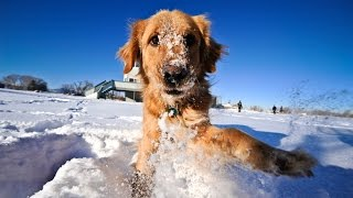 Cats and Dogs Playing in the Snow Compilation 2014
