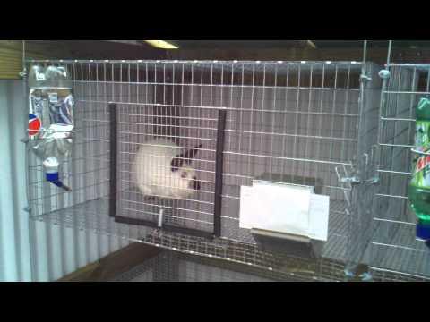 Intro new Rabbits and hutch.