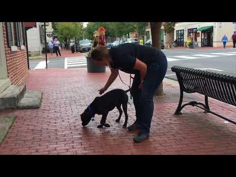 2.5 Year Old Maverick!  Best Dog Boarding and Training Program   Off Leash K9 Training