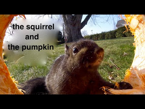 the Squirrel and the Pumpkin