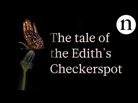 The tale of the Edith's checkerspot: Butterflies caught in an evolutionary trap