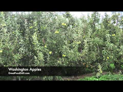 Washington State - Apples