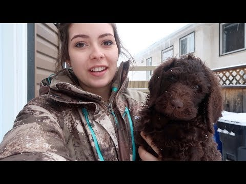 A Day With A Puppy -- 1.20.2018