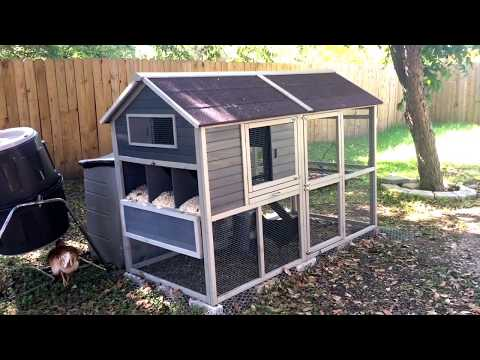Review Of Innovation Pet Chicken Coop!