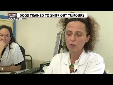 Dogs to detect breast cancer