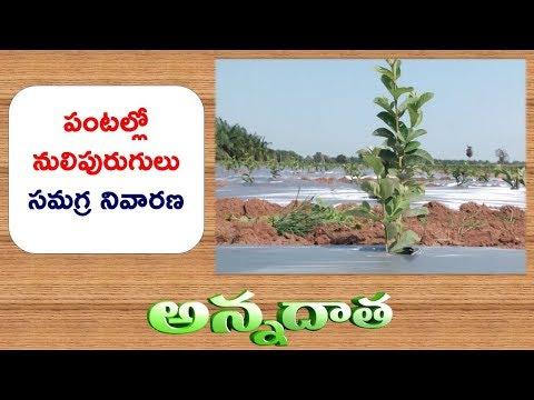 Remedies for Nematode Problem In Crops || ETV Annadata