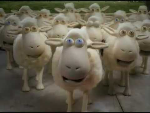 The Serta Couting Sheep