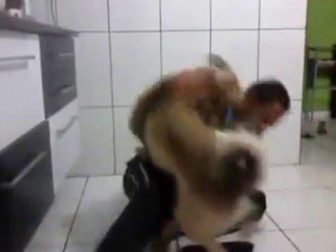 Xxx Mp4 Animal X Dog 3gp Sex