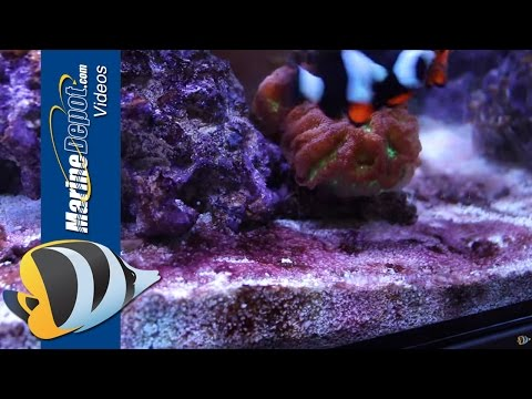 Red Slime: How to Prevent and Remove Cyanobacteria