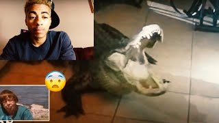 FLORIDA ALLIGATORS 🐊 ARE GETTING OUT OF HAND! 😂 FREAK COMPILATION