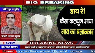 सीतापुर। गाय से हैवानियत, युवक ने किया गर्भवती गाय का बलात्कार - BRAVE NEWS LIVE