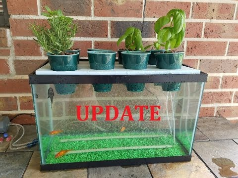 UPDATE My DIY Aquaponics Aquarium Project 6 Month Update & Tank Cleaning With DIY Bottle Filter